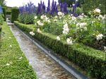 One of the rills that annoys Robin Lane Fox in the Walled Garden at Alnwick Garden