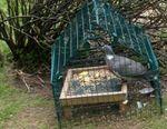 A-meshed-ground-feeder from BirdTableNews