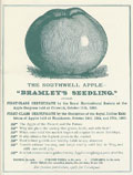Bramleys_seedling_award. Courtesy of the Bramley Apple Information Service.