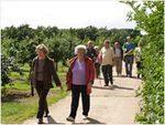Guided and self-guided tours available at Brogdale