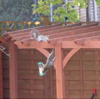 Two squirrels and a bird feeder