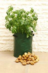 Potato bags from Haxnicks