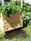 The four foot square crate built by Phillip Cairns for his potato plants in photo by Phillip Cairns