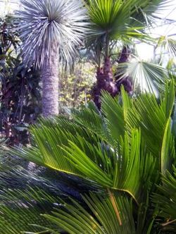 Exotic planting from the Plantation