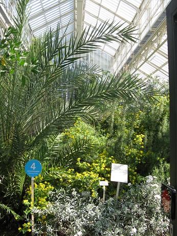 Mediterranean House, Berlin Botanical Garden