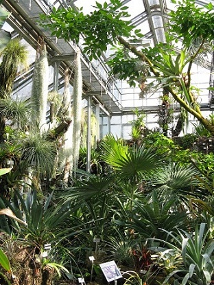 Inside the glasshouses at the Berlin Botanical Garden