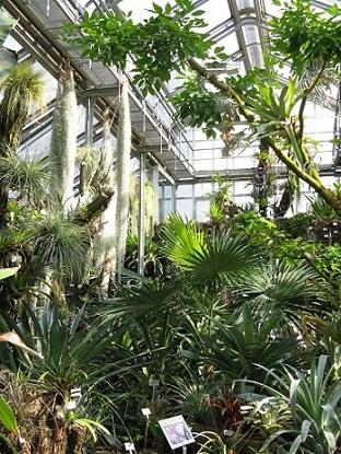 Inside the glasshouses at the Berlin Botanical Garden