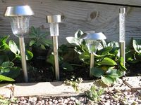 All four lights in daylight, with strawberry plants for comparison