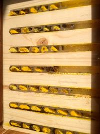 Red Mason bees in Nurturing Nature nest box