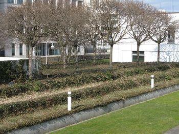 The garden at the Bauhaus Archiv, Berlin