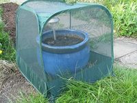 Gardenskill's pop-up cage.