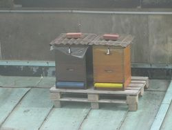 Beehives on top of the Berliner Dom 2