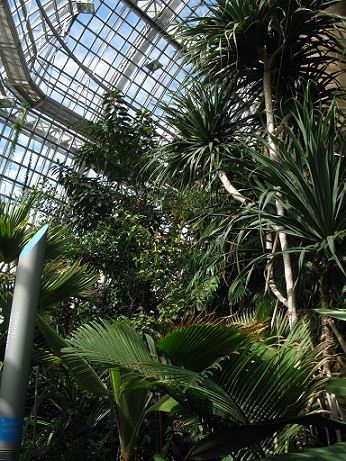 Grosses Tropenhaus, Berlin Botanical Garden