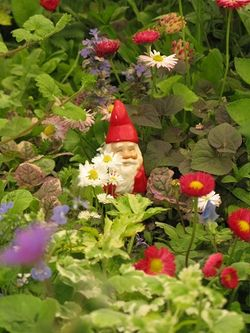 A gnome nestles in a grassless lawn at Chelsea Flower Show 2013