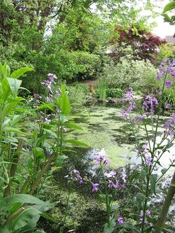 Pond and stream at Rose Cottage