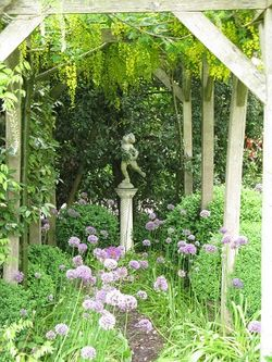 Laburnum pergola with allium and statue, Rose Cottage, NGS
