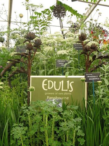Edulis stand at Hampton Court Flower Show 2013