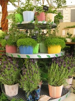 Herbal tea cupcakes, Sparsholt College Stand, Chelsea Flower Show 2013