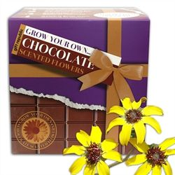 Grow-your-own-chocolate-daisies