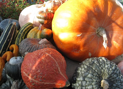 Pumpkins and squashes at Wisley, December 2014