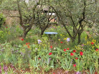 James Basson's A Perfumer's Garden in Grasse, Chelsea 2015