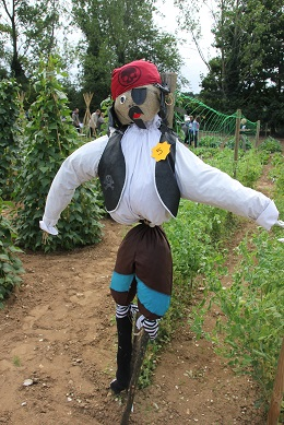 Pirate Scarecrow, 3rd in Mr Fothergill's scarecrow competition 2015