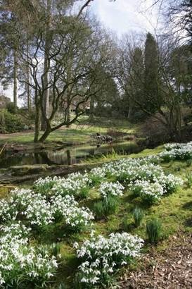 Rode Hall Snowdrops (2)