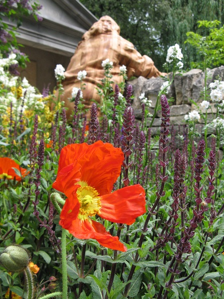Poppy, Meningitis Now Futures Garden, designed by John Everiss, Chelsea Flower Show 2016