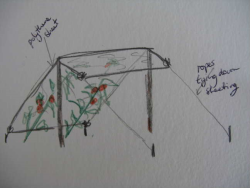 Drawing of Bob Flowerdew's anti-blight shelter for tomatoes. Copyright Helen Gazeley