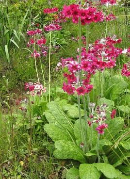 Planting on Dan Pearson's Laurent Perrier Chatworth garden