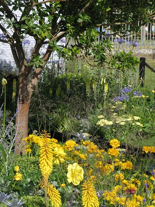 Yellow planting in Magna Carta 800, RHS Hampton Court, 2015