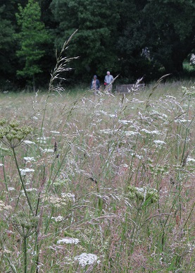 Wildfower Meadow, Compton Verney, Warks