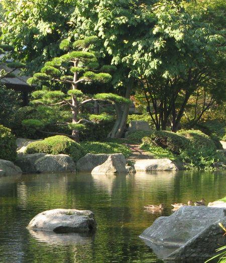 Pond in Japanese Garden, Hamburg Planten un Blomen, Germany