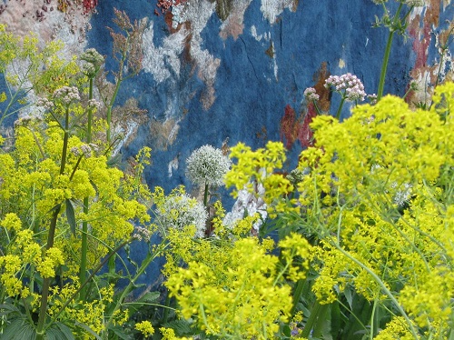 Woad in the AkzoNobel Honeysuckle Blue(s) Garden, RHS Chelsea 2016