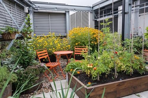 Eversheds Vegetable Garden 2