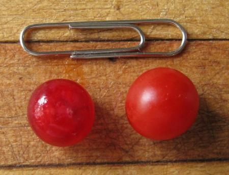 Red Currant tomato, redcurrant
