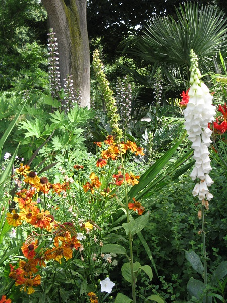 Foxgloves, acanthus, helenium Vauxhall Park