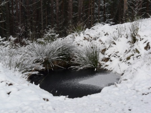 Icy_pond_in_Struie_Wood_-_geograph.org.uk_-_1055578
