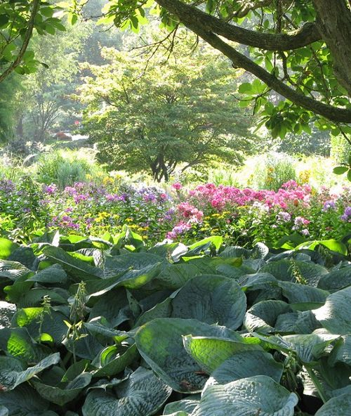 Hostas, Botanical Garden, Hamburg, Germany