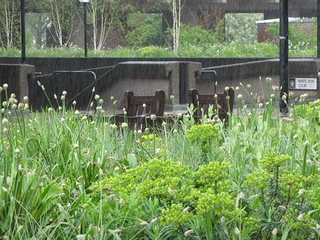 Nigel Dunnett's Beech Gardens, Barbican Estate