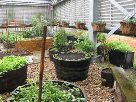 Eversheds Vegetable Garden, Open Garden Squares Weekend