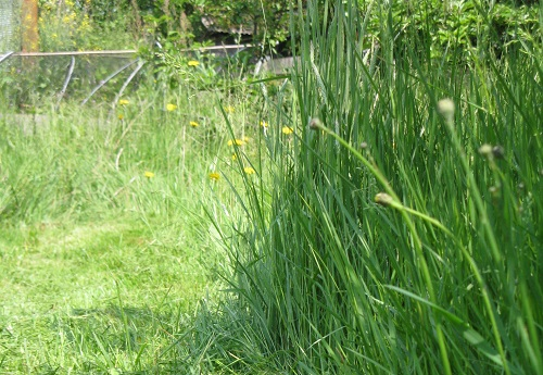 Long grass in back garden