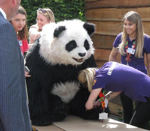 Panda at RHS Chelsea 2017